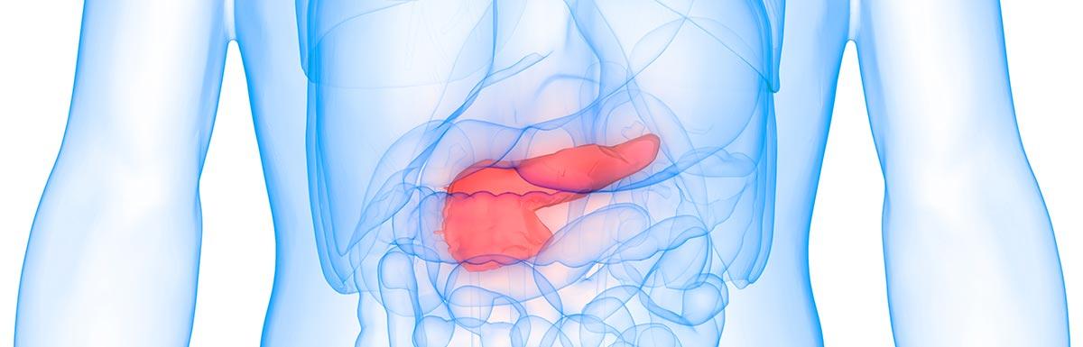 Scan-Ansicht von Form und Lage der Bauchspeicheldrüse: Diabetes kann das Organ schwer schädigen.