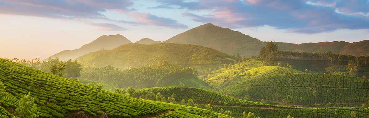 Eine grün bewachsene Berglandschaft: Die Glycowohl-Inhaltsstoffe kommen aus der Natur.